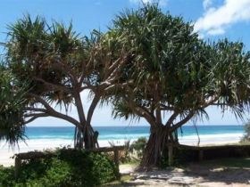 Pacific Surf Absolute Beachfront Apartments - Accommodation Port Macquarie