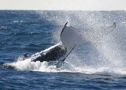 Whale Watching Sydney - Accommodation Port Macquarie