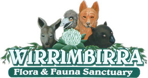 Wirrimbirra Sanctuary - Accommodation Port Macquarie