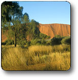 Uluru - Kata Tjuta National Park - Accommodation Port Macquarie
