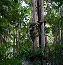 Rainforest Skywalk - Accommodation Port Macquarie