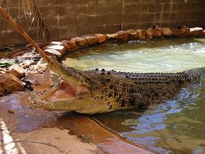 Wyndham Zoological Gardens and Crocodile Park - Accommodation Port Macquarie