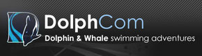 Dolphcom - Dolphin  Whale Swimming Adventures - Accommodation Port Macquarie