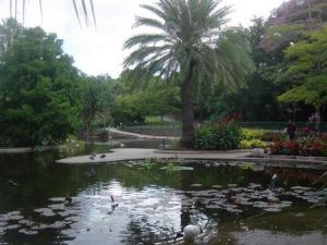 Brisbane City Botanic Gardens - Accommodation Port Macquarie