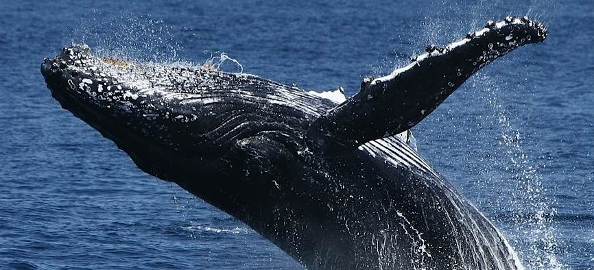 Spirit Of Gold Coast Whale Watching - Accommodation Port Macquarie