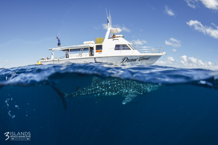 Three Islands Whale Shark Dive - Accommodation Port Macquarie