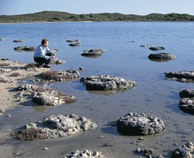 Lake Thetis Stromatolites - Accommodation Port Macquarie