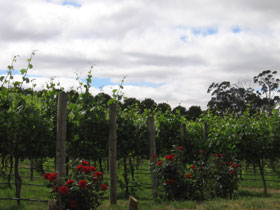 Manyara Vineyard - Accommodation Port Macquarie
