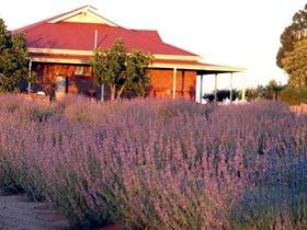 Bella Lavender Estate - Accommodation Port Macquarie
