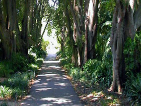 Adelaide Botanic Garden - Accommodation Port Macquarie