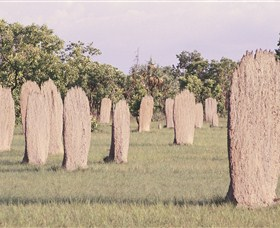 Magnetic Termite Mounds - Accommodation Port Macquarie