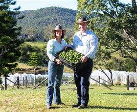 Hinterland Feijoas - Accommodation Port Macquarie