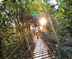 Tree Top Walkway - Accommodation Port Macquarie