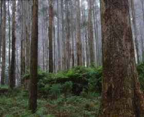 Kinglake National Park - Accommodation Port Macquarie