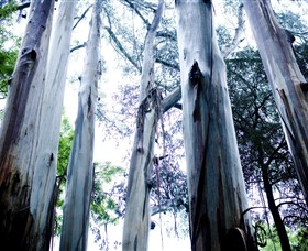 Dandenong Ranges National Park - Accommodation Port Macquarie