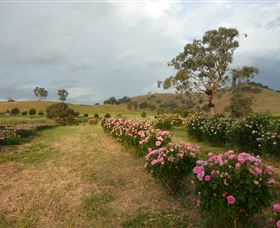 Damasque Rose Oil Farm - Accommodation Port Macquarie