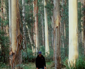 Blue Gum Forest - Accommodation Port Macquarie