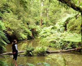 Morwell National Park - Accommodation Port Macquarie