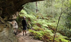 Dharug National Park - Accommodation Port Macquarie