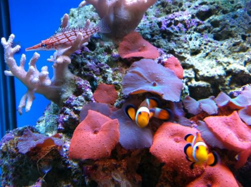 Tropical Marine Centre - Accommodation Port Macquarie