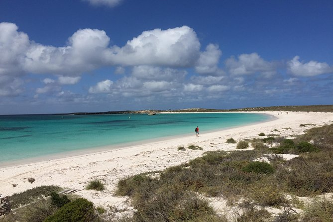 Abrolhos Island Half Day Fly and Flipper - Accommodation Port Macquarie