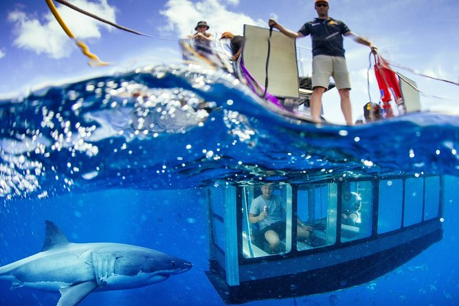 White Shark Tour with Optional Cage Dive from Port Lincoln - Accommodation Port Macquarie
