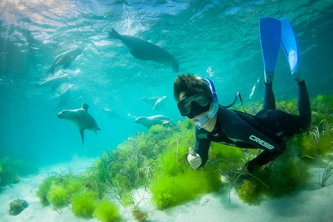 Half-Day Sea Lion Snorkeling Tour from Port Lincoln - Accommodation Port Macquarie
