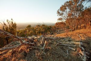 Chick Hill Walk - Accommodation Port Macquarie