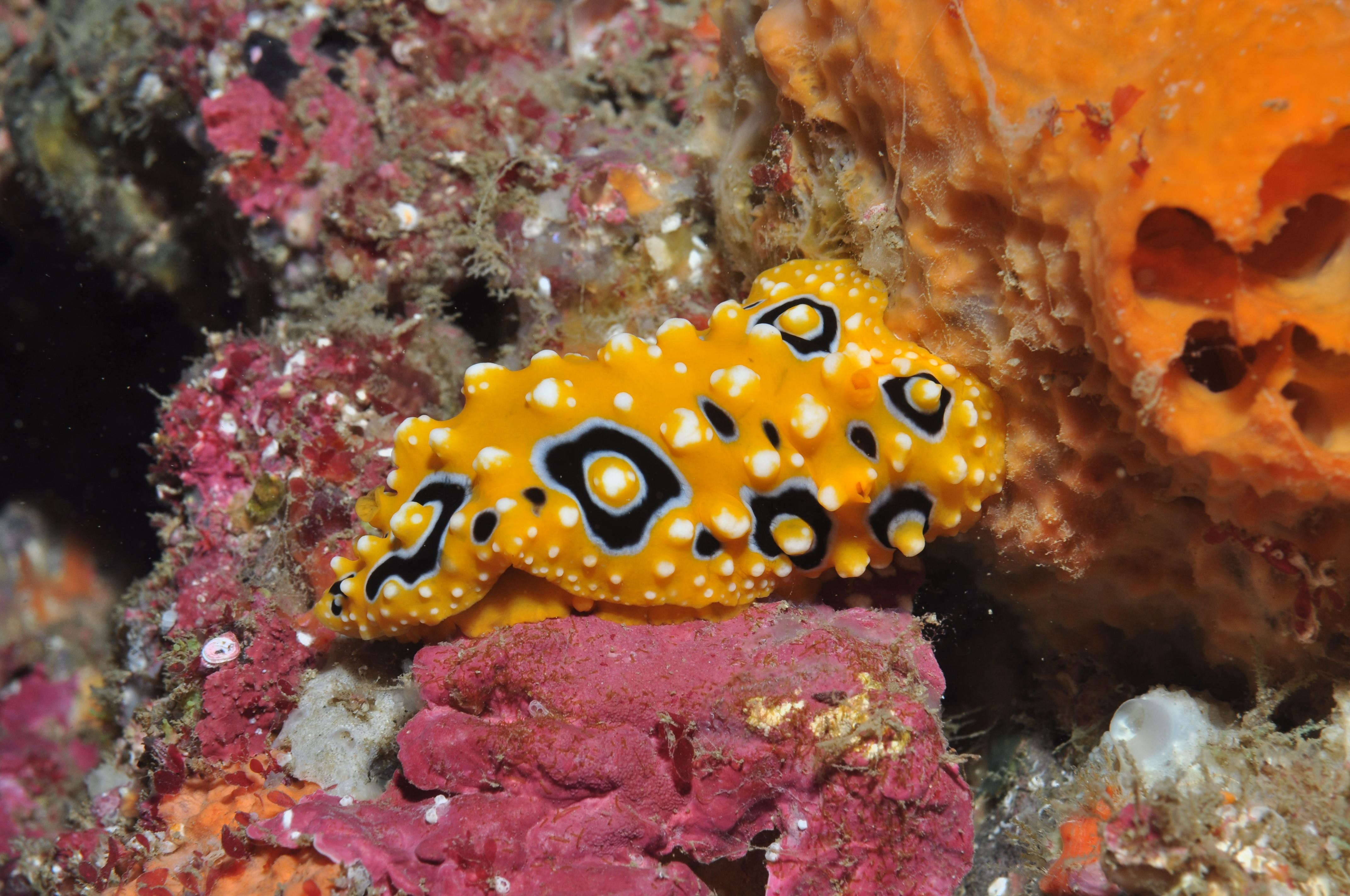 Magic Mountain Dive Site - Accommodation Port Macquarie