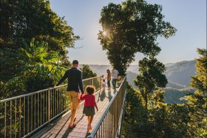 Mamu Tropical Skywalk - Accommodation Port Macquarie