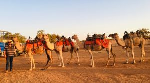 Broken Hill Camels - Accommodation Port Macquarie
