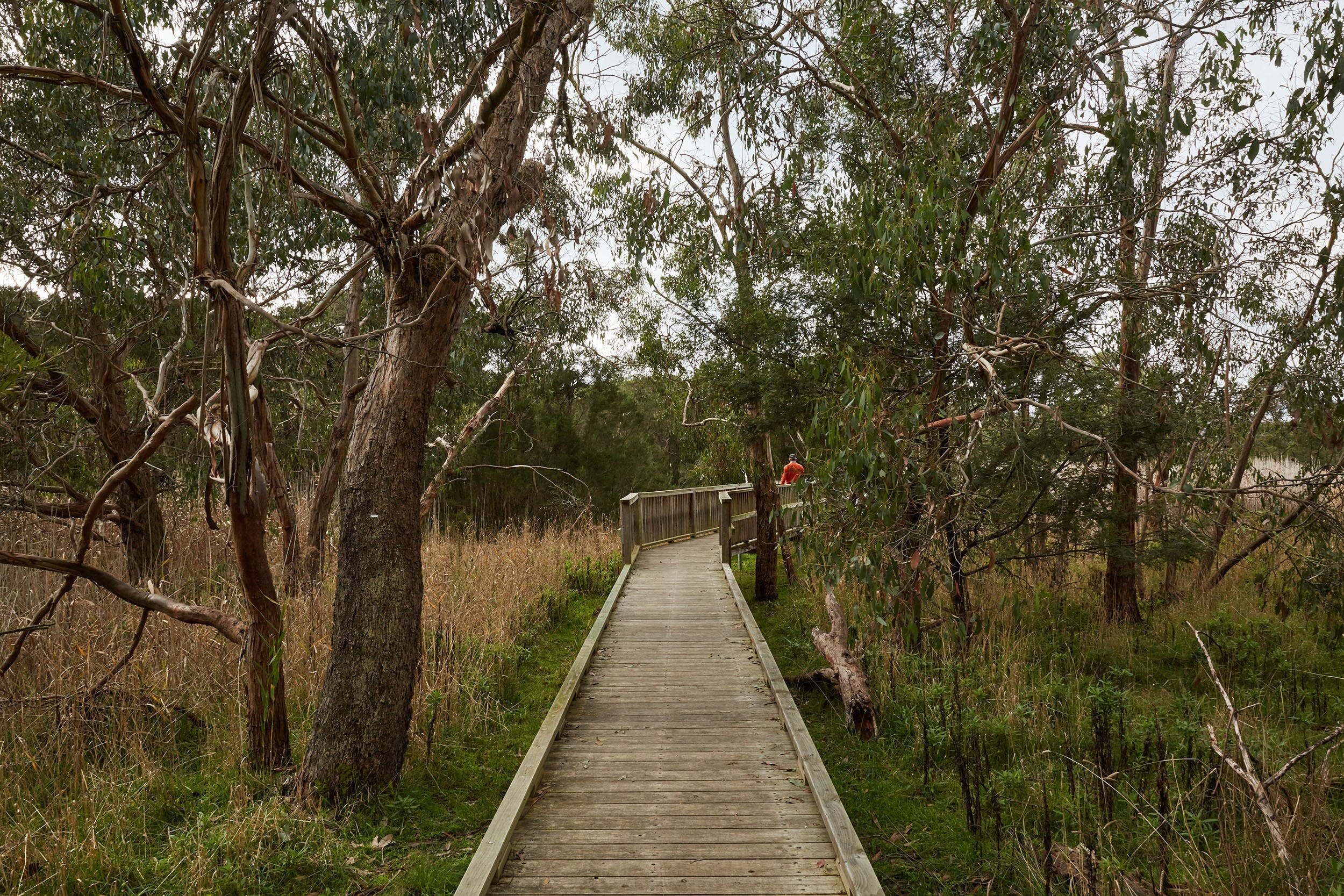 The Briars Park Walking Trails - Accommodation Port Macquarie