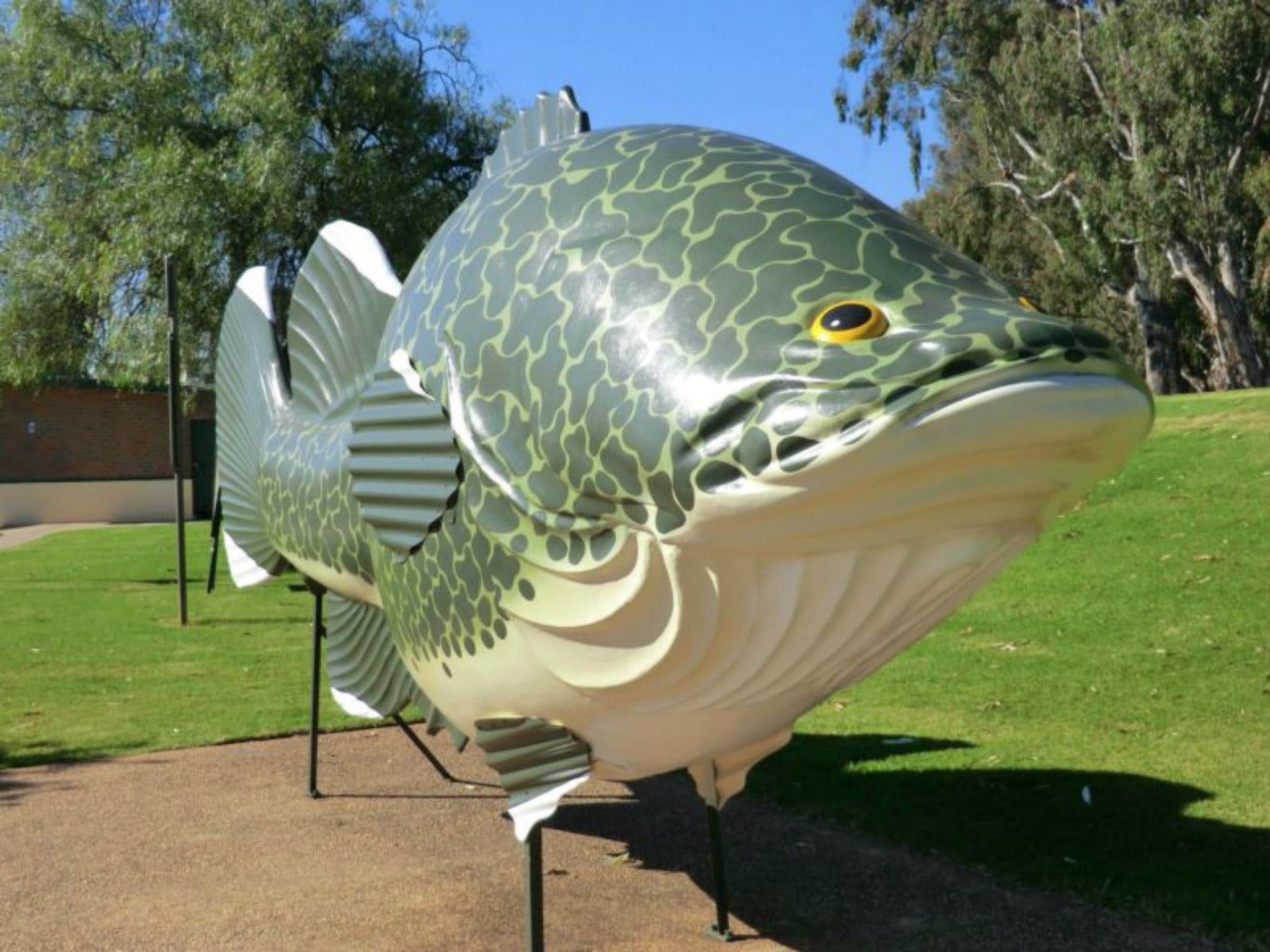 Big Murray Cod - Accommodation Port Macquarie