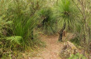 Grass Tree Circuit - Accommodation Port Macquarie