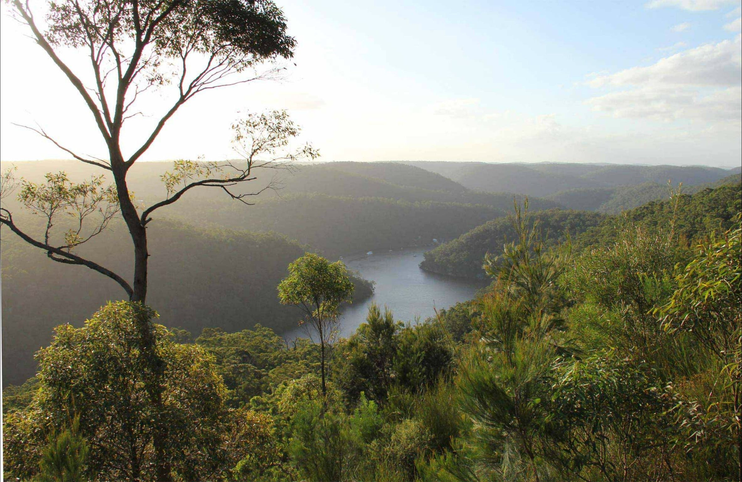 Great North walk - Berowra Valley National Park - Accommodation Port Macquarie
