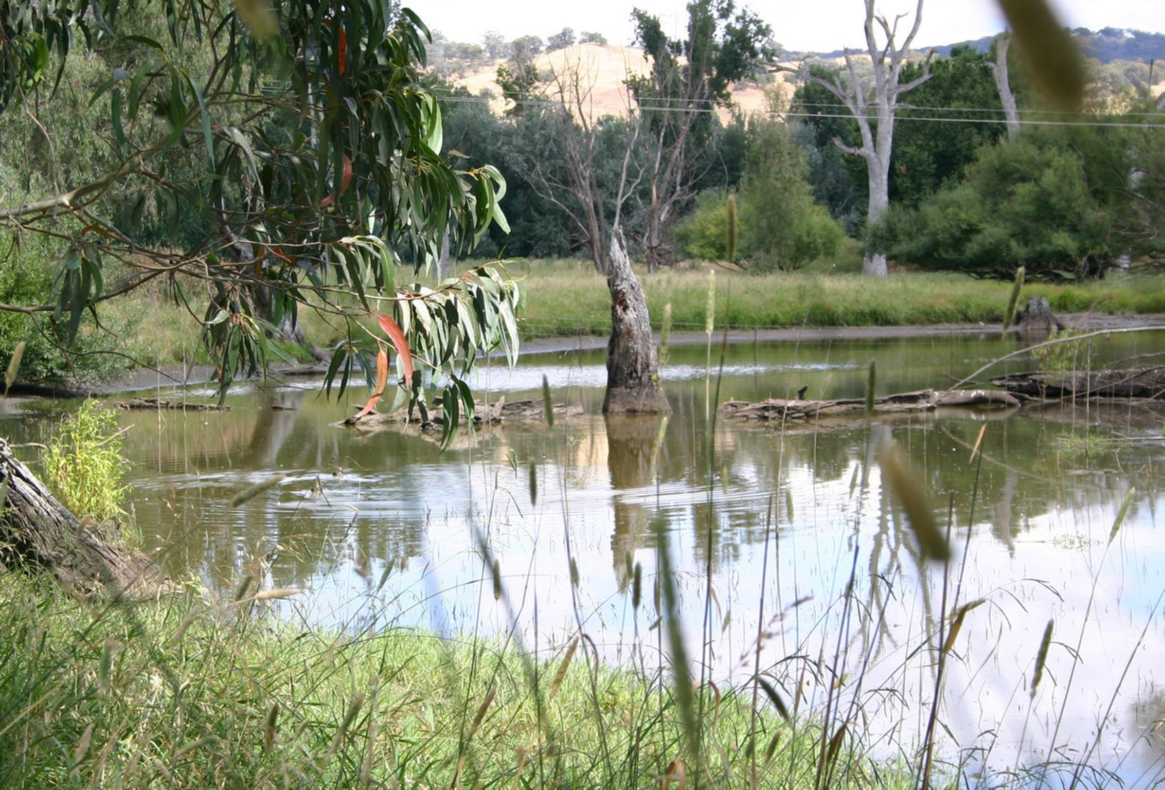 Tumut Wetlands - Accommodation Port Macquarie
