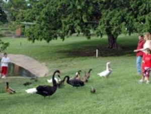 Anzac Park and Ululah Lagoon - Accommodation Port Macquarie
