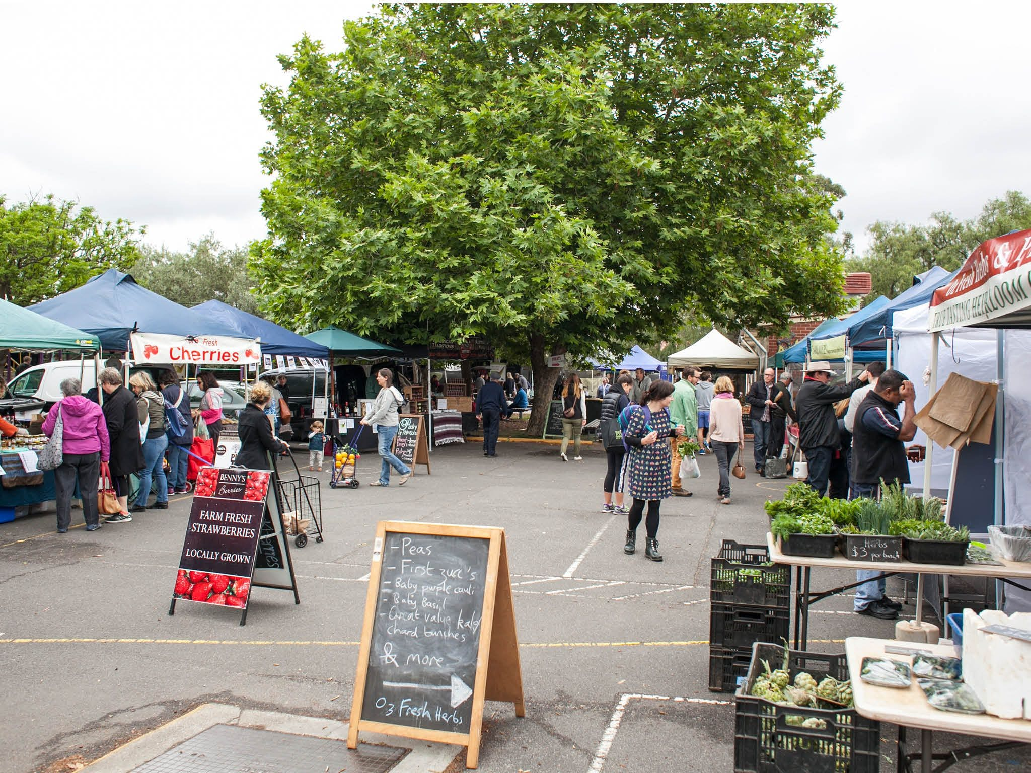 Alphington Farmers' Market - Accommodation Port Macquarie