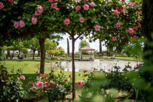 Griffith Spring Fest - Accommodation Port Macquarie