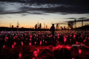 Field of Light Uluru - Accommodation Port Macquarie