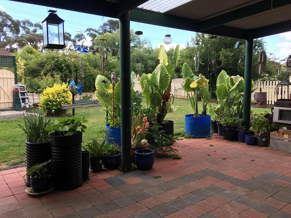 Blue Wren Bungalow - Accommodation Port Macquarie